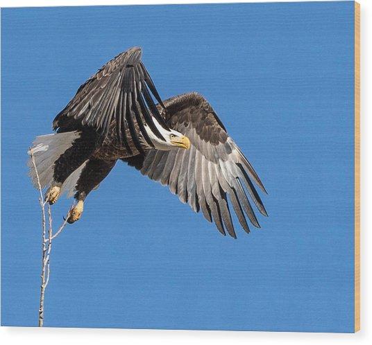 Bald Eagle Flight 3 Wood Print
