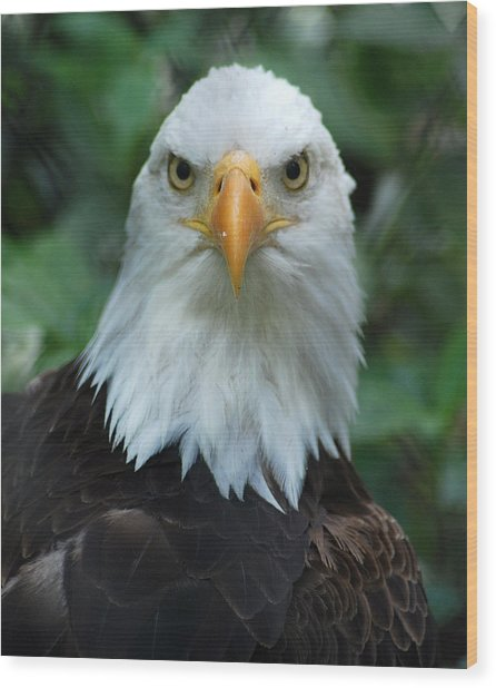 Bald Eagle Head Wood Print by Christine Savino