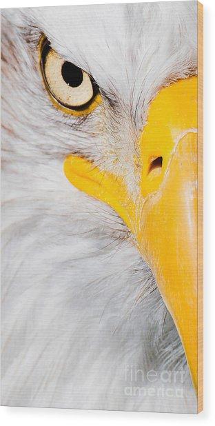 Bald Eagle In Focus Wood Print