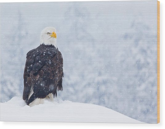 Bald Eagle In The Snow Wood Print by Brandon Broderick