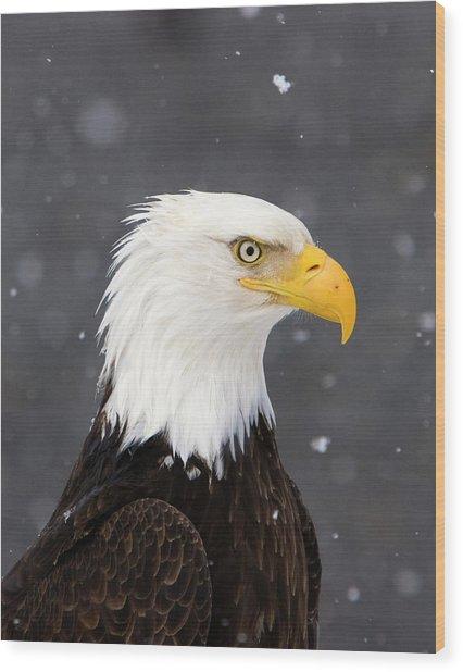 Bald Eagle Intensity Wood Print