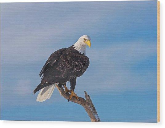 Bald Eagle Majesty Wood Print
