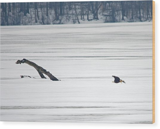 Bald Eagle Over Middle Creek Wood Print