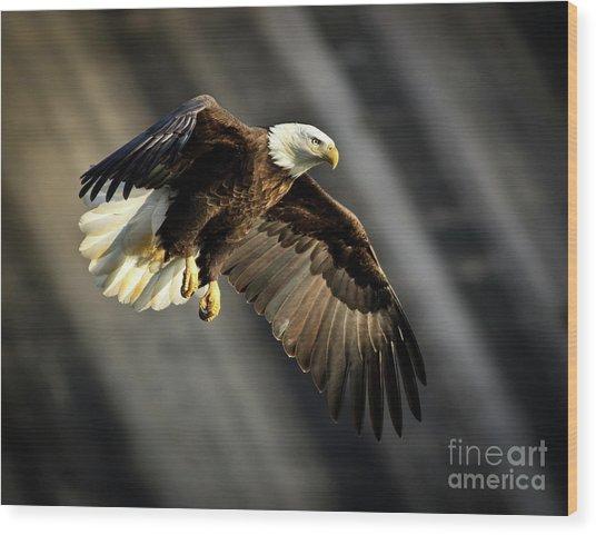 Bald Eagle Prepares To Dive Wood Print