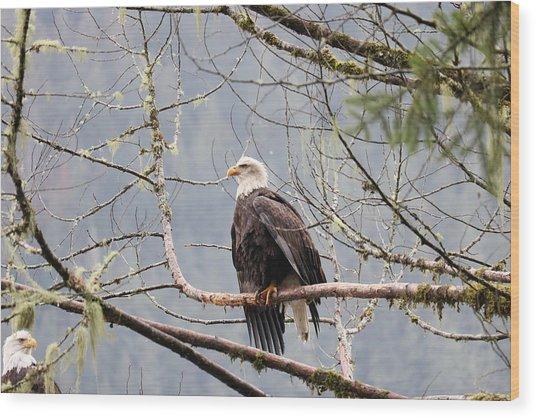 Bald Eagle Resting Wood Print