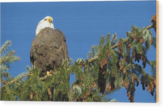 Bald Eagle Sunbathing Wood Print