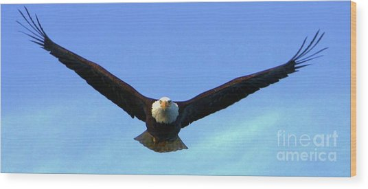 Bald Eagle Victory Wood Print by Dean Edwards