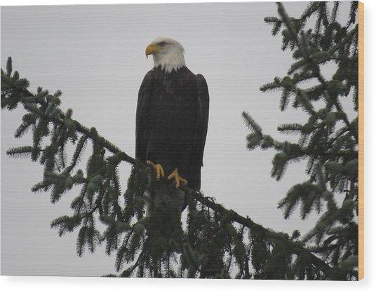 Bald Eagle Watching Wood Print