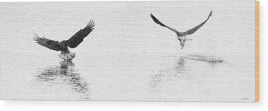 Bald Eagles Fishing Wood Print