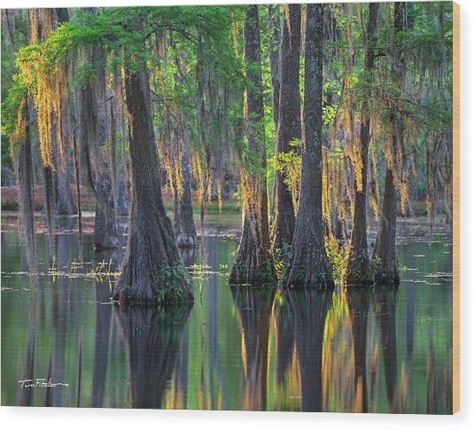 Baldcypress Trees, Louisiana Wood Print