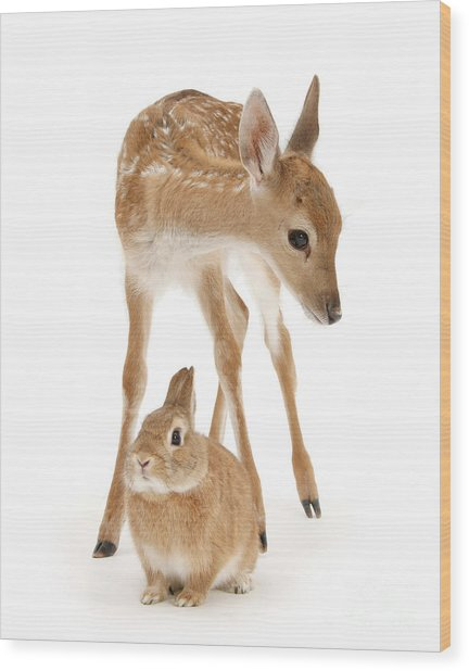 Bambi And Thumper Wood Print