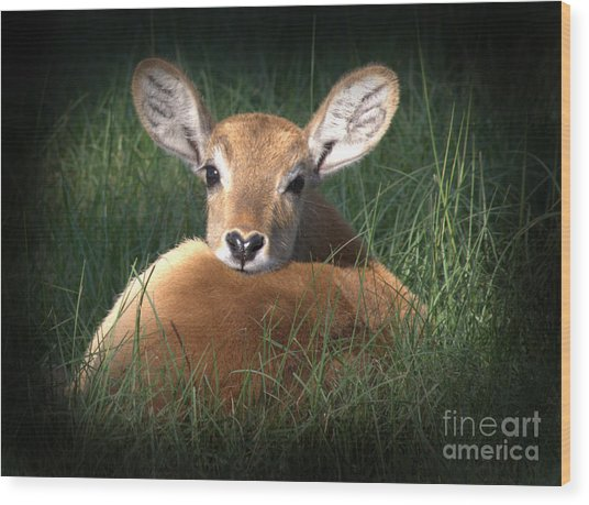 Bambi Wood Print