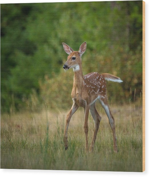 Bambi // Whitefish, Montana  Wood Print