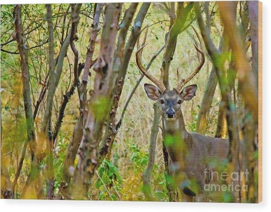 Bambi's Father Wood Print