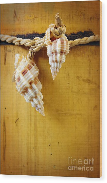 Bamboo And Conches Wood Print