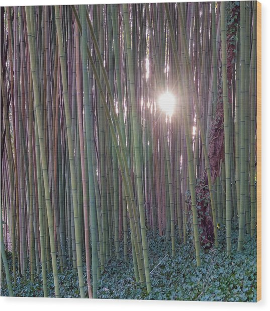 Bamboo And Ivy Wood Print