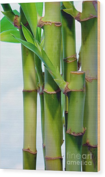 Bamboo And Sky Wood Print