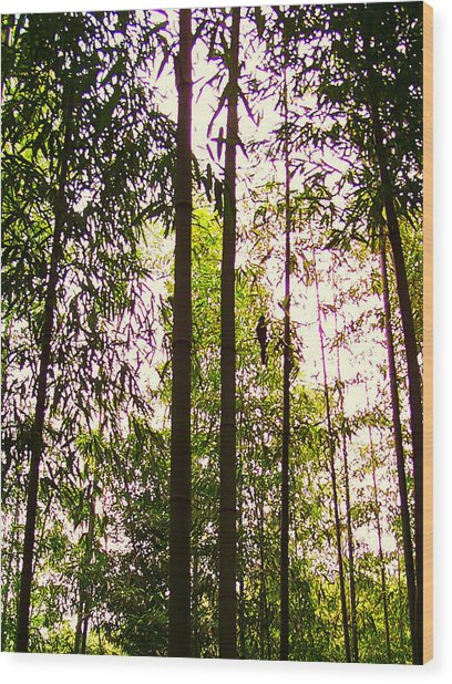 Bamboo And The Cuckoo Wood Print by Michael C Crane