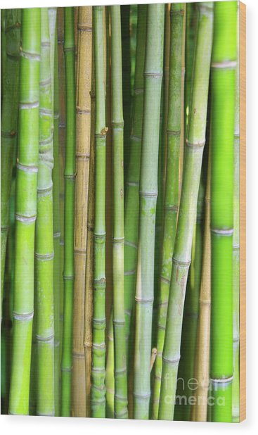 Bamboo Background Wood Print