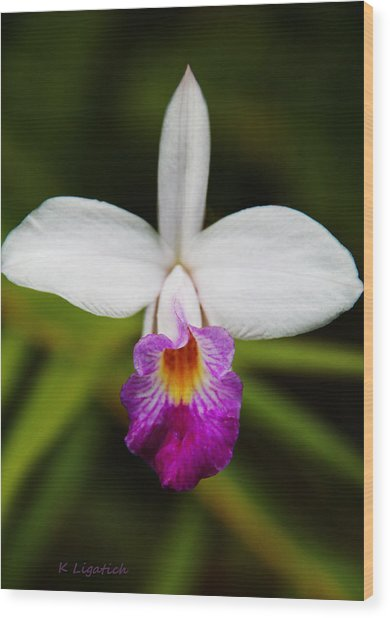 Bamboo Orchid  Wood Print