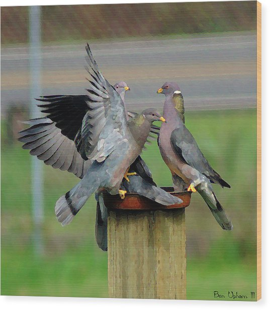 Band-tailed Pigeons #1 Wood Print