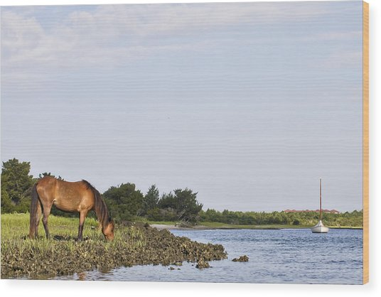 Banker Horse Along Taylors Creek Wood Print