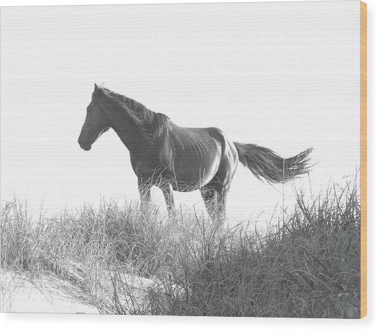 Banker Horse On Dune  1 Wood Print