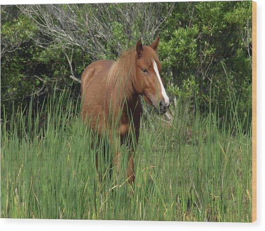 Banker Horses - 10 Wood Print