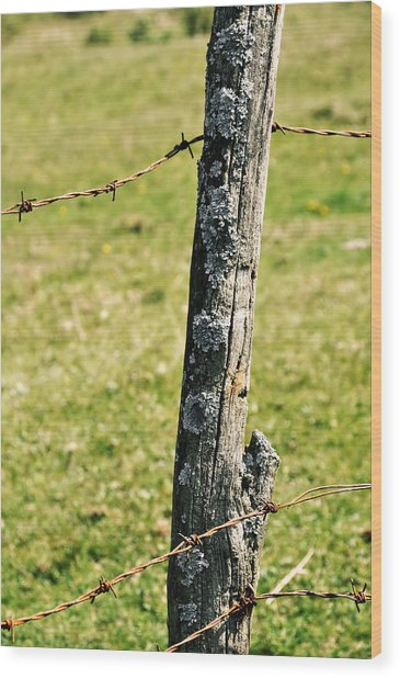 Barbed Fence Post Wood Print by JAMART Photography