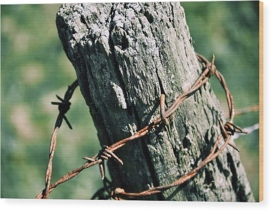 Barbed Wire Wood Print by JAMART Photography