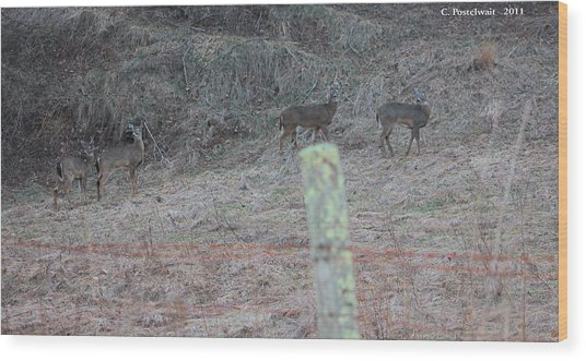 Barbwire And Whitetails Wood Print by Carolyn Postelwait