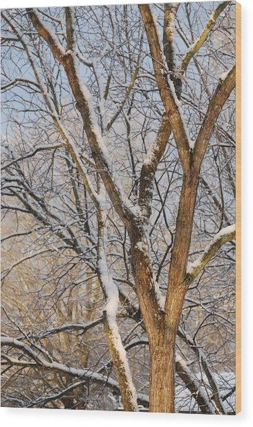 Bare Branches Wood Print by Trudi Southerland