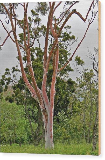 Bare Pink Tree Wood Print by Liz Vernand