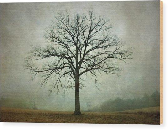 Bare Tree And Fog Wood Print