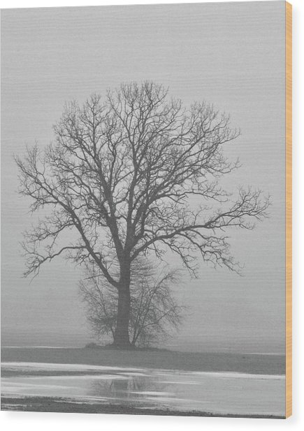 Bare Tree In Fog Wood Print