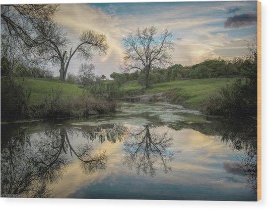 Bare Tree Reflections Wood Print