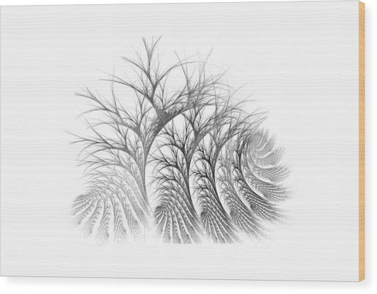 Bare Trees Daylight Wood Print