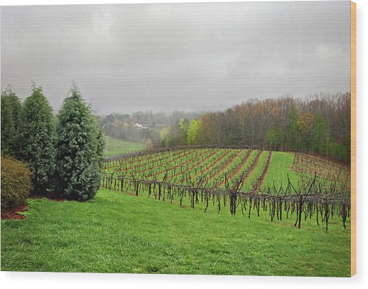 Bare Vineyard Wood Print