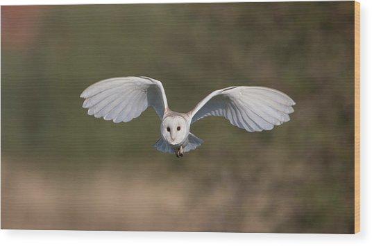 Barn Owl Approaching Wood Print
