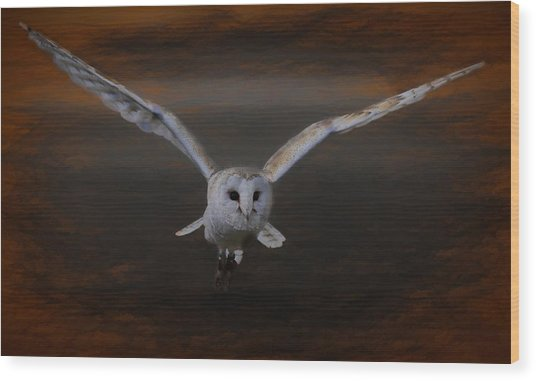 Barn Owl Drama Wood Print