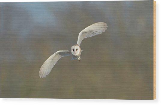 Barn Owl Hunting In Worcestershire Wood Print
