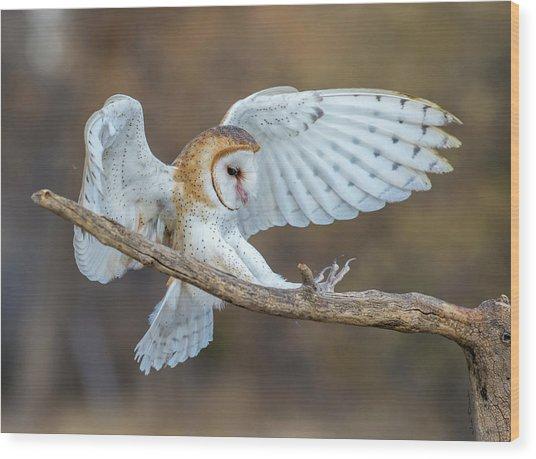 Barn Owl In Flight Wood Print