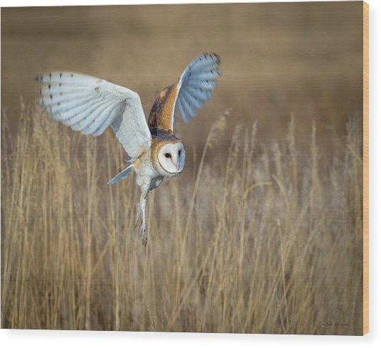 Barn Owl In Grass Wood Print