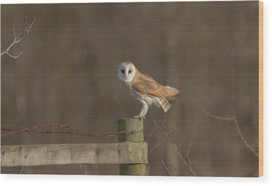 Barn Owl On Fence Wood Print