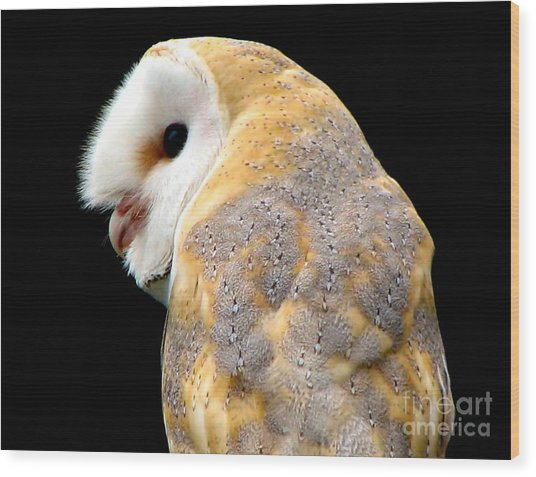 Wood Print featuring the photograph Barn Owl by Rose Santuci-Sofranko