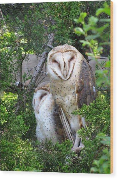 Barn Owls Wood Print by George Jones
