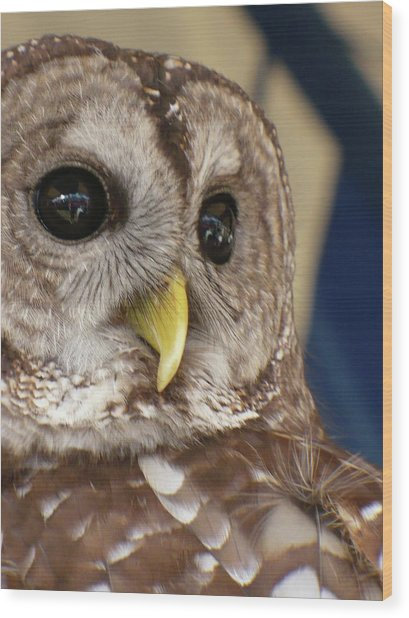 Barney The Owl Wood Print