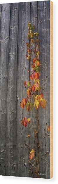 Barnyard Vine Wood Print
