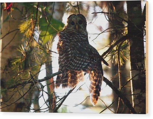 Barred Owl At Sunrise Wood Print