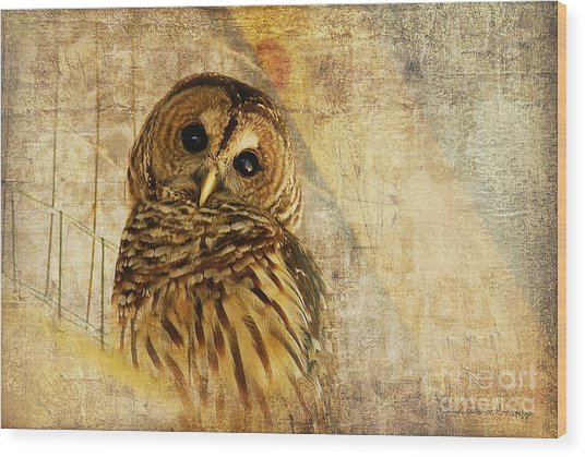 Wood Print featuring the photograph Barred Owl by Lois Bryan